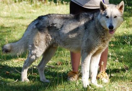 Misrepresentation - Wolf-dog Education...